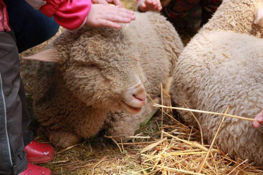 A húsvéti családi programok már nagypénteken megkezdődnek a Budakeszi Arborétumban