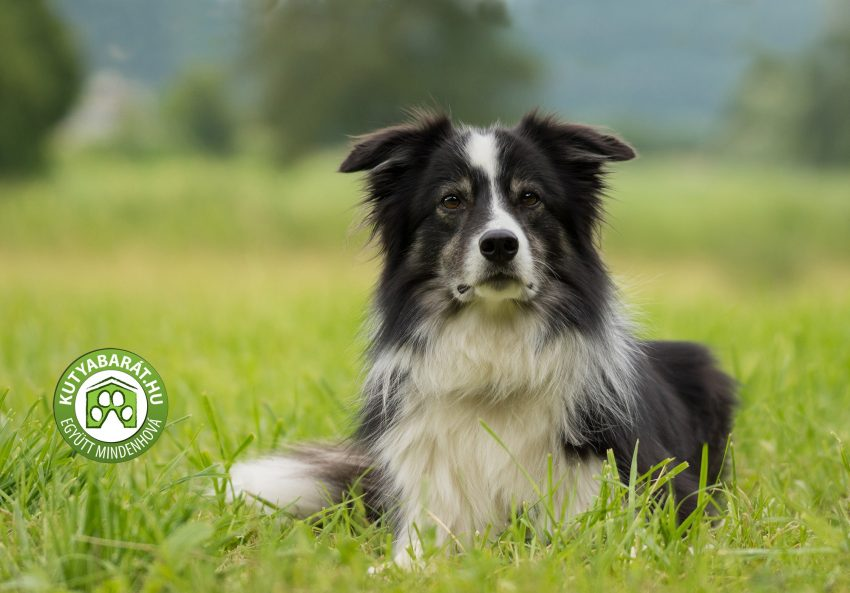 A legjobb kutyabarát program Budapesten