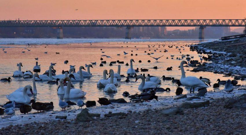 A Római-part Budapest talán legtökéletesebb randihelyszíne