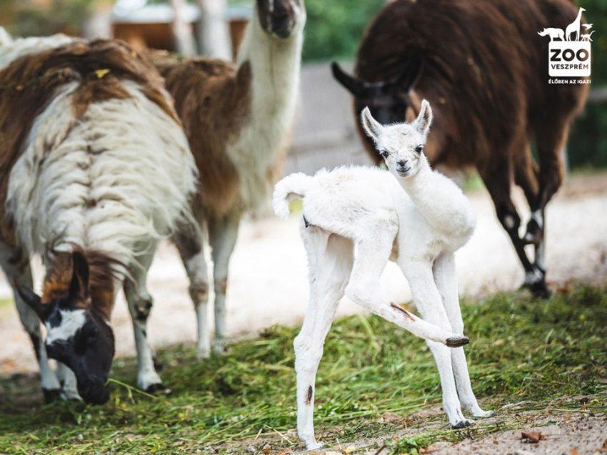 A Veszprémi Állatkertben minden nap izgalmas programok várnak