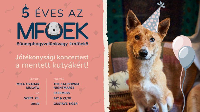 Programok MA: Jótékonysági koncertest a mentett kutyákért