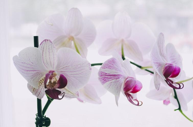 Ingyenes budapesti program: Orchideák éjszakája az Oázis Kertészetben