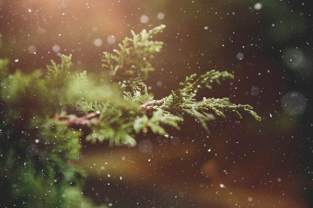 7 megható karácsonyi vers - Innen válassz idézetet az ajándékodhoz!