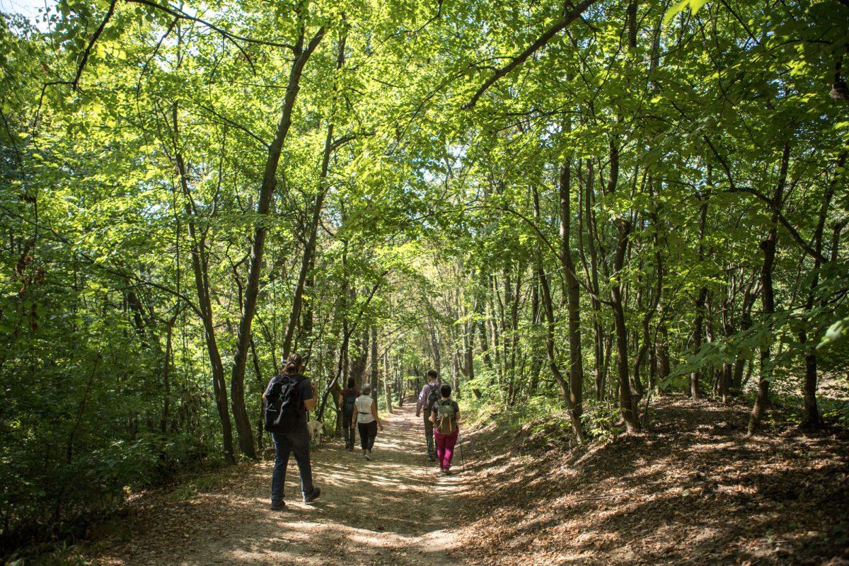 Természetjárás a Mátyás-hegyen: Erdőzsongás, vadvirág és belső béke
