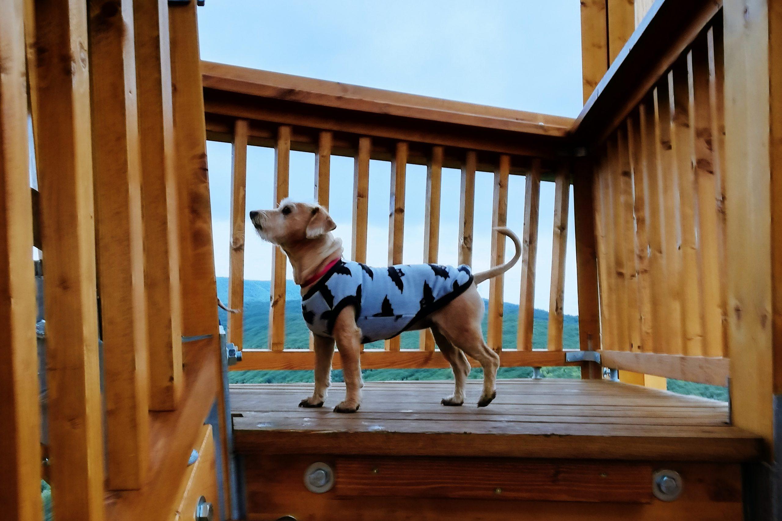 Kiránduljunk kutyával: Erdei séta a Királyrét új kilátójához