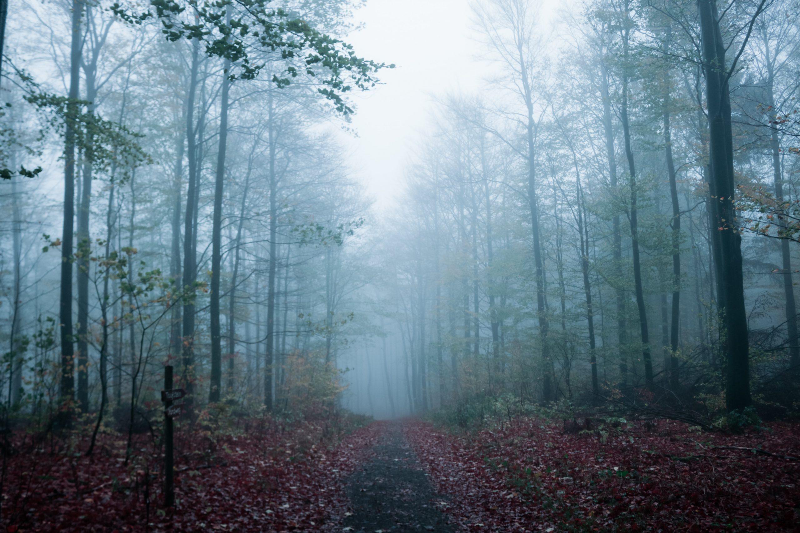 Online könyvajánló: 5 páratlan skandináv krimi borzongós, hideg őszi estékre
