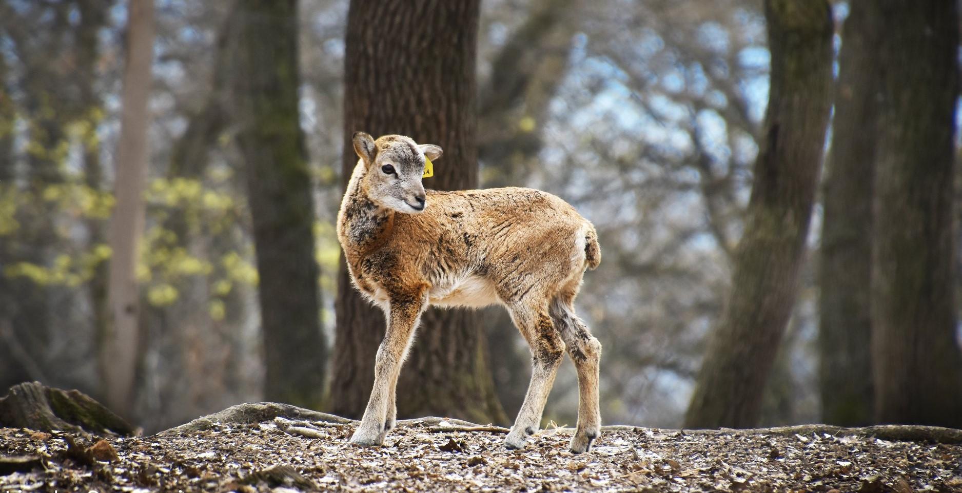 6 vadaspark és állatkert Budapesten és környékén, ami felejthetetlen kalandokkal vár