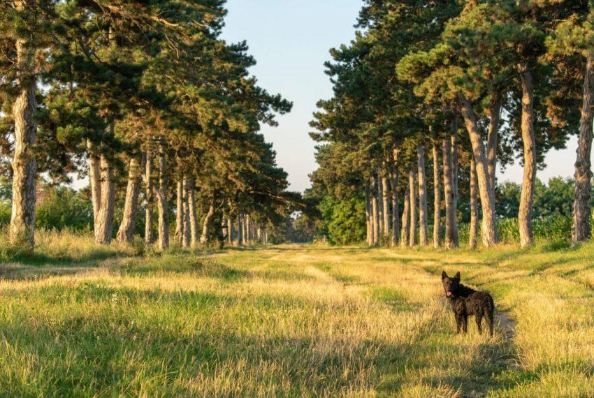 Balaton kutya strand