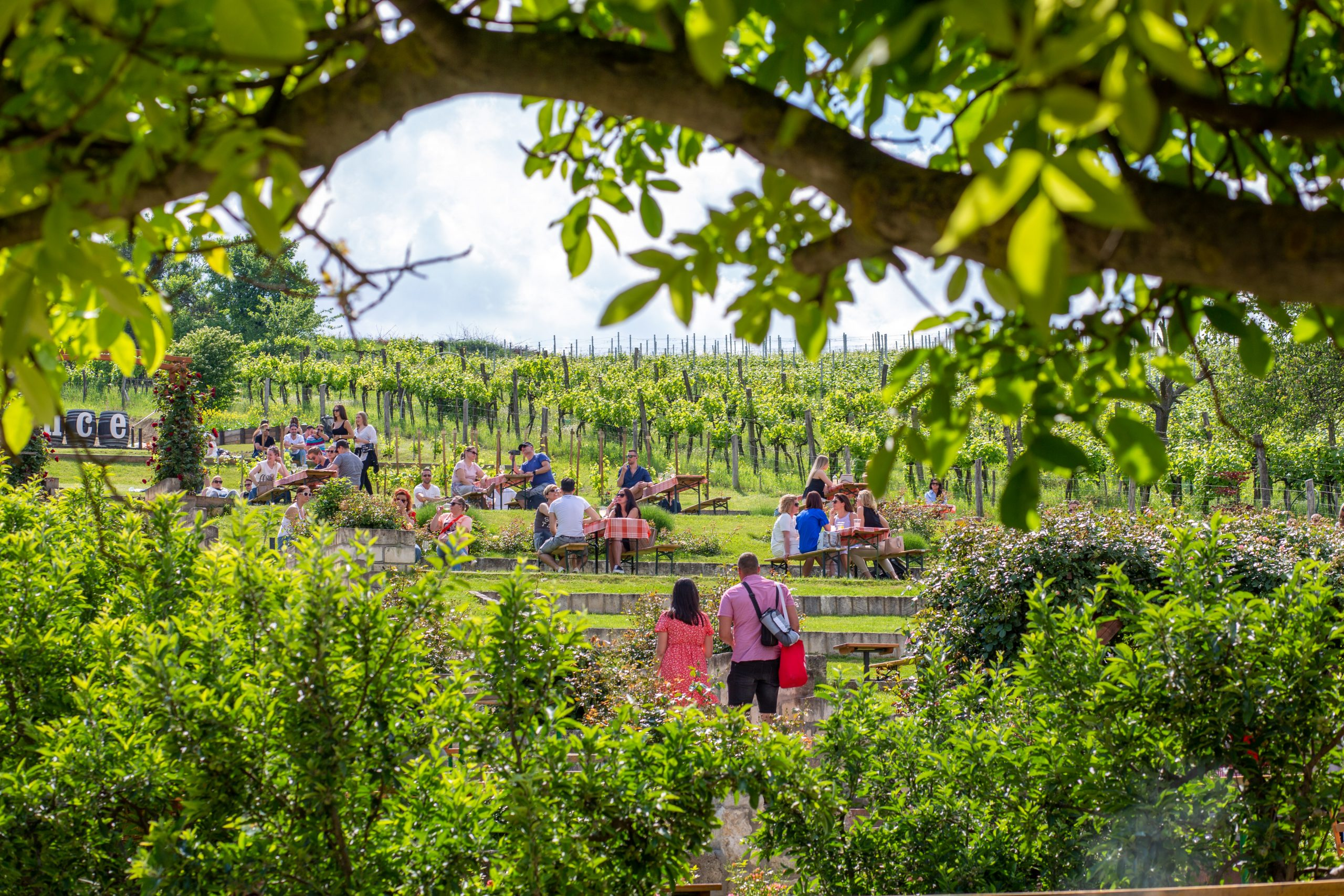 Biciklivel Budapest szőlőskertjében: A leglátványosabb kerékpáros útvonal Etyeken