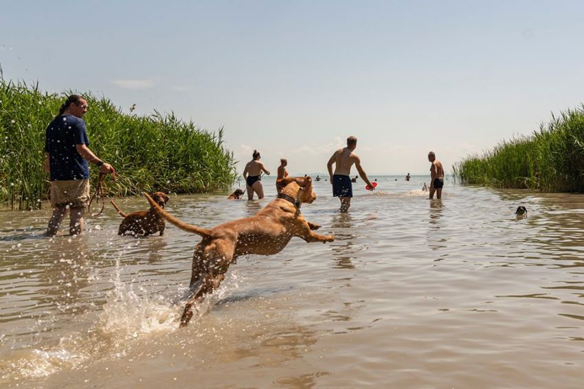 kutya strand Balaton