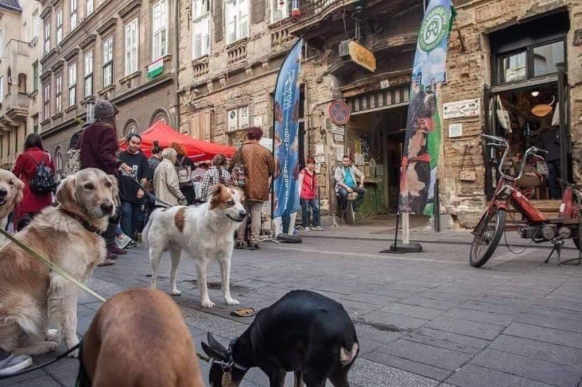 Szabadtéri programok Budapesten: Őszi Kutyabarát Piknik és Vásár